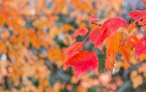 Fall Break Makes a Welcome Return