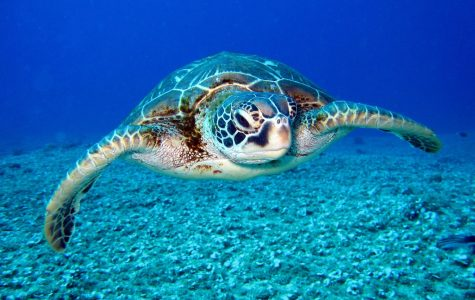 New Alarming Study Reveals Science Behind Why So Many Sea Turtles Die From Plastic Ingestion