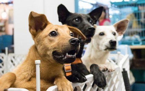 Pets Find Homes During Quarantine