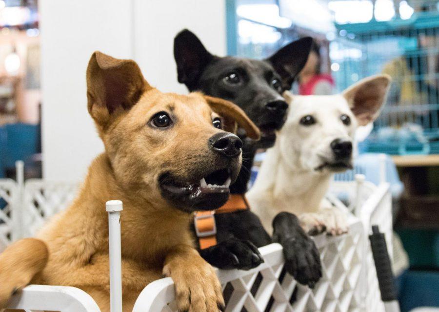 Pets+Find+Homes+During+Quarantine